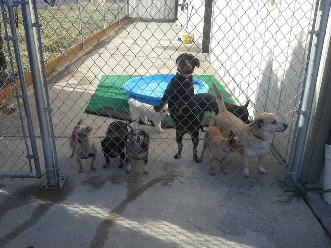 Boarding facilities and playcare sutherlin veterinary for Boarding facility for dogs